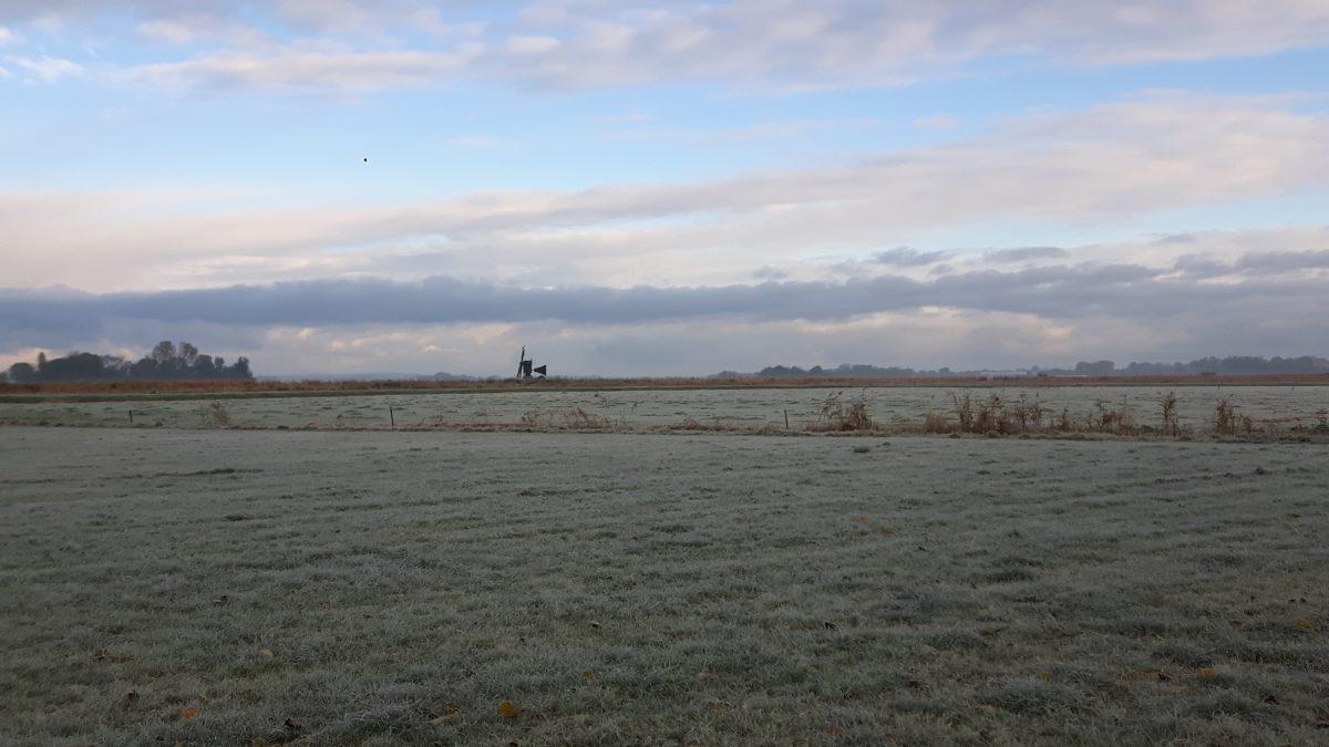 Vorst in de polder